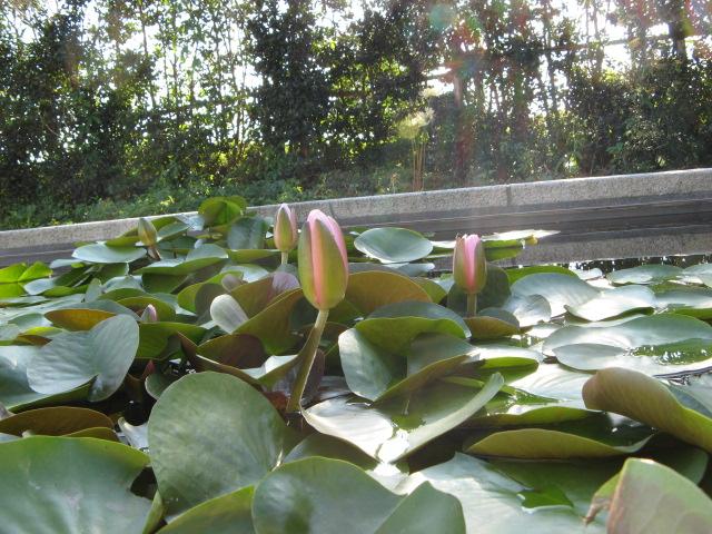 水生植物園みずの森Part.5_a0106807_1832727.jpg