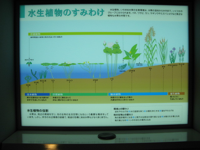 水生植物園みずの森Part.4 _a0106807_1842248.jpg