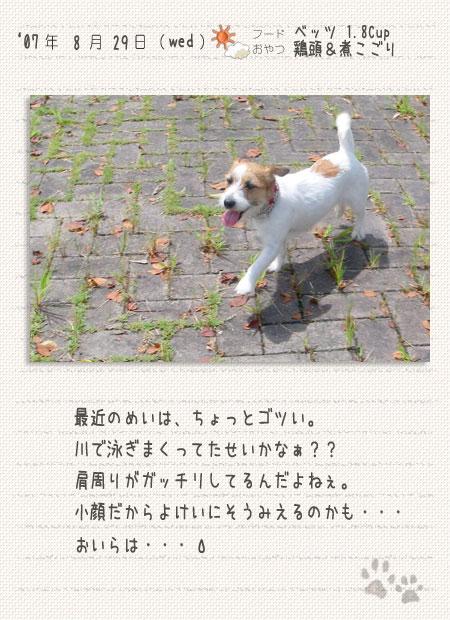 b0040323_130066.jpg