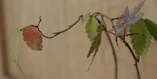 秋の気配_a0099628_1633963.jpg