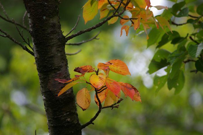 初秋の奥卯辰山 こぶしの実色づく_d0043136_22141635.jpg