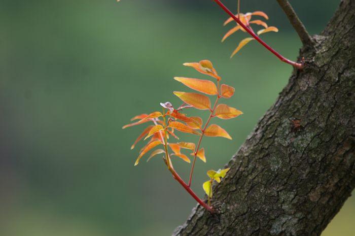 初秋の奥卯辰山 こぶしの実色づく_d0043136_22143320.jpg