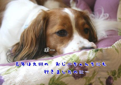d0013149_0451140.jpg