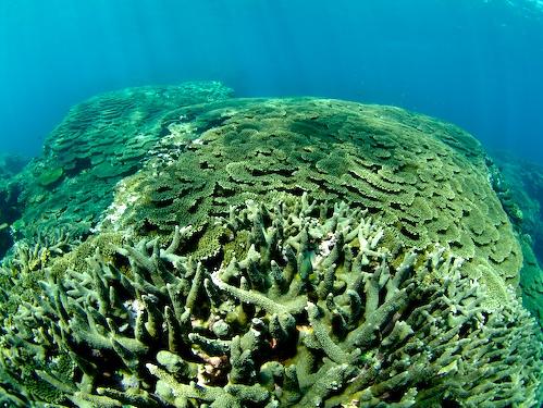 9/1 サンゴ礁モニタリング_a0010095_21302312.jpg