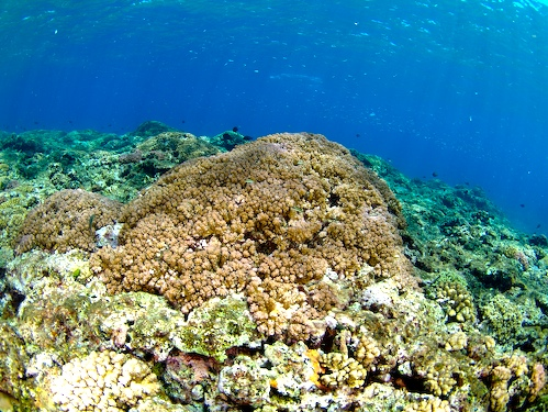 9/1 サンゴ礁モニタリング_a0010095_2130670.jpg