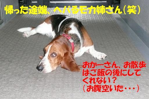 f0121712_9162724.jpg