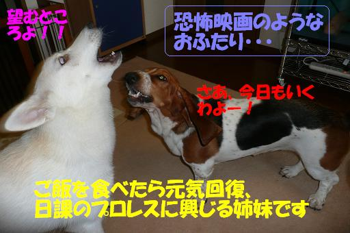 f0121712_9163494.jpg