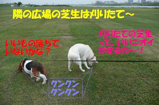 f0121712_916554.jpg