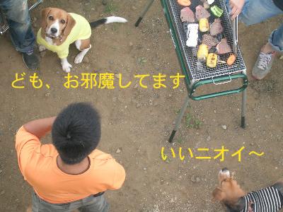 b0104420_11403346.jpg