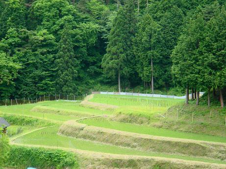畑の棚田_f0095094_02265.jpg