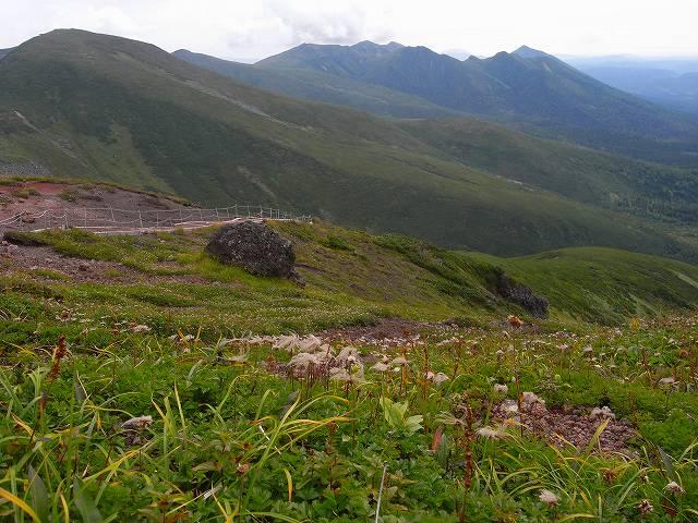 富良野岳の花2_f0138096_12364634.jpg