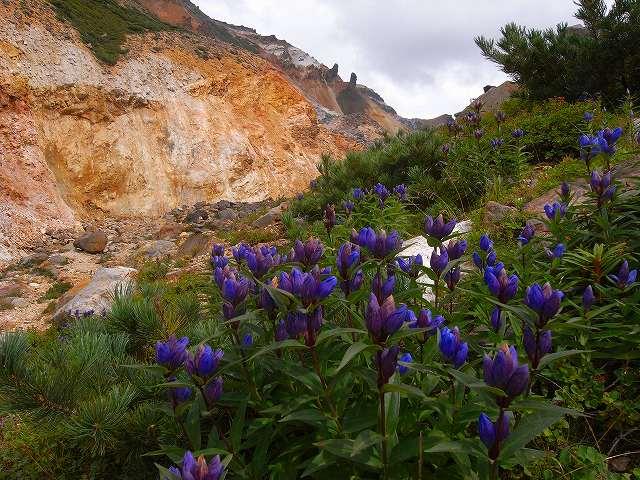 富良野岳の花他_f0138096_12431836.jpg