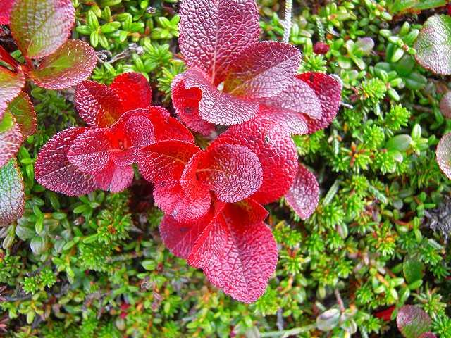 富良野岳の花他_f0138096_1243344.jpg