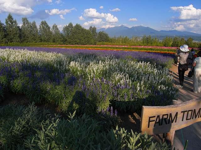 富良野岳の花他_f0138096_12434725.jpg