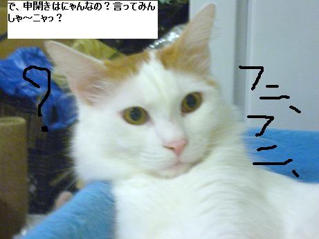 c0132537_11545214.jpg
