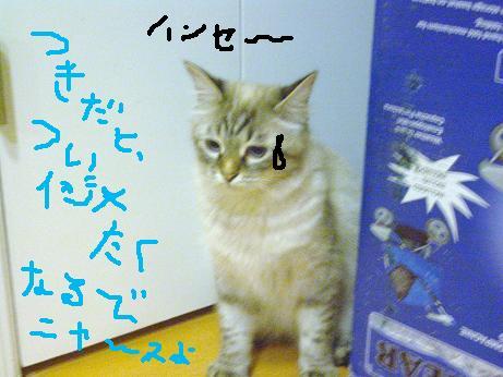 c0132537_11554569.jpg