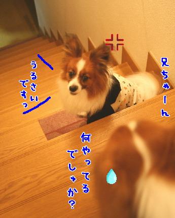 d0013149_1303436.jpg