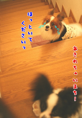 d0013149_1354748.jpg