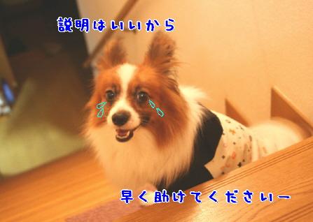 d0013149_139598.jpg