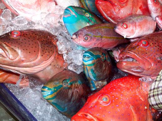 沖縄・牧志公設市場の魚たち_b0015157_0423952.jpg