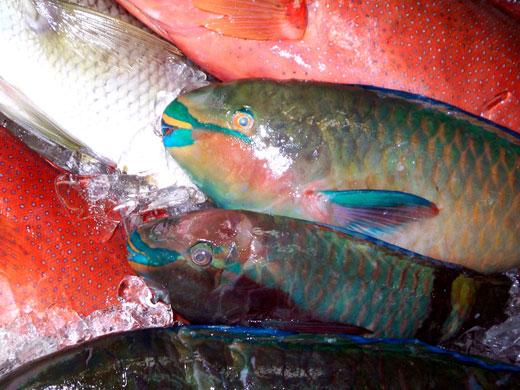 沖縄・牧志公設市場の魚たち_b0015157_043325.jpg