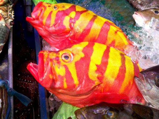 沖縄・牧志公設市場の魚たち_b0015157_0433861.jpg
