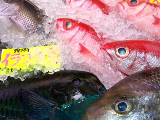 沖縄・牧志公設市場の魚たち_b0015157_0434823.jpg