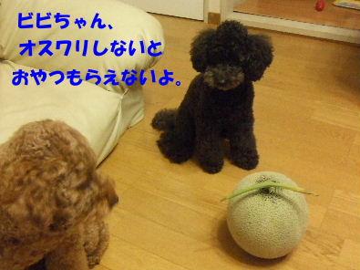 c0112203_0541964.jpg