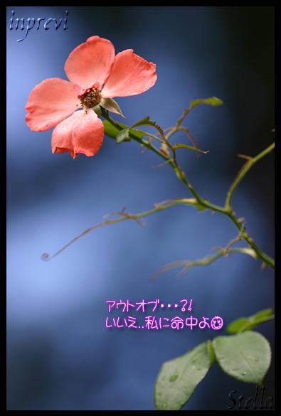 d0015026_18241927.jpg