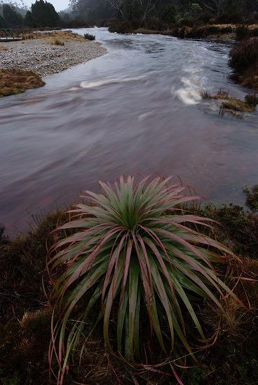 World finest rain at Tasmania_f0050534_1336394.jpg