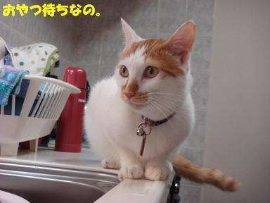 f0046854_2011372.jpg