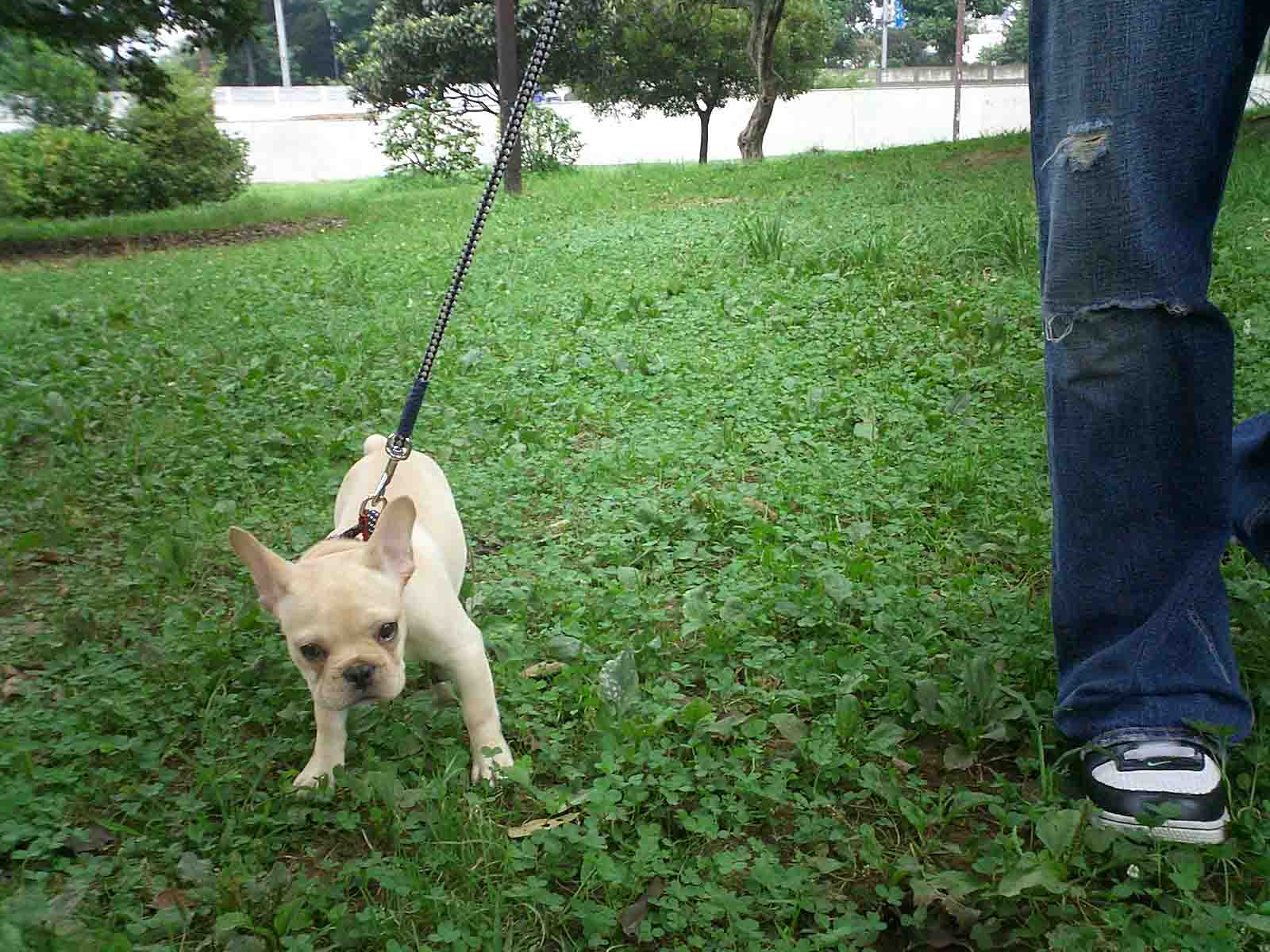 はじめてのお散歩。無事、公園デビューに成功です。_f0143269_11335413.jpg