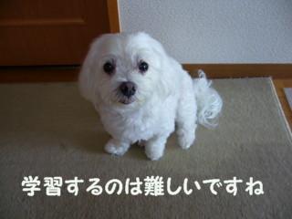 f0145192_20102837.jpg