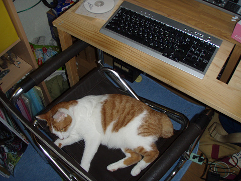 猫達のお気に入りの場所_b0074601_20483941.jpg