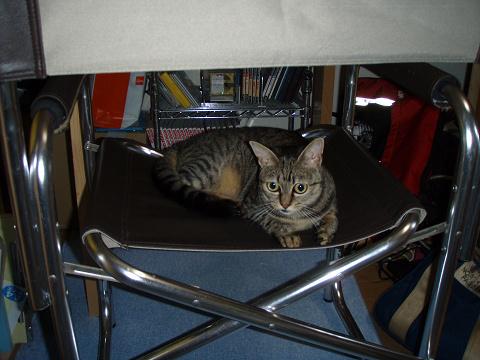 猫達のお気に入りの場所_b0074601_20501292.jpg