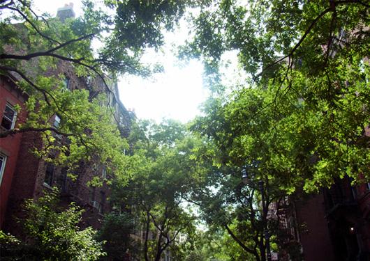 住宅街までロマンチックな秋のニューヨーク_b0007805_1253840.jpg