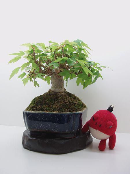 ミニ盆栽。_d0101133_17305043.jpg