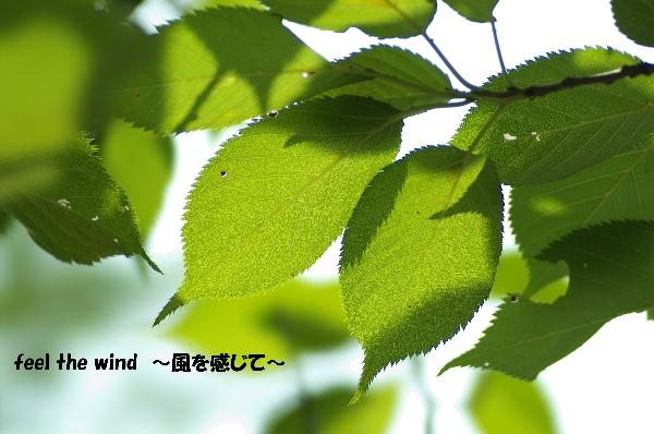 f0063363_19301866.jpg
