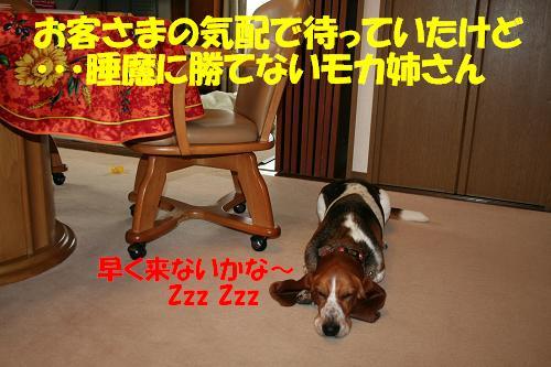 f0121712_1644412.jpg