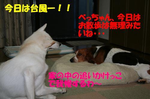 f0121712_664879.jpg