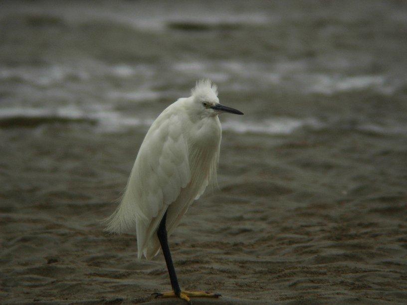 蒲生海岸9月2日_f0148627_1272027.jpg