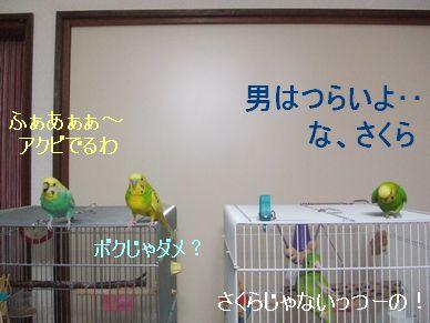 b0082757_22474938.jpg