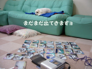 f0145192_14501149.jpg