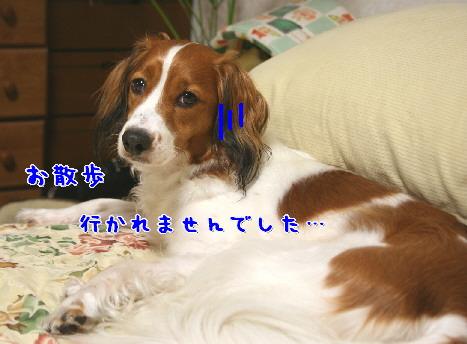 d0013149_038281.jpg