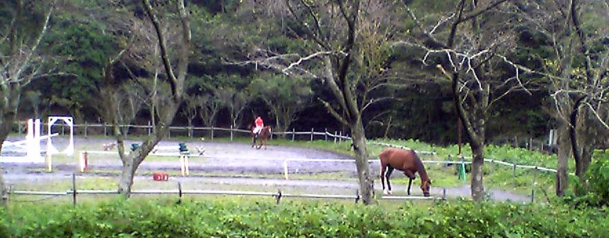 Vivo馬を見る_b0005652_9501717.jpg