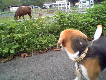 Vivo馬を見る_b0005652_951140.jpg