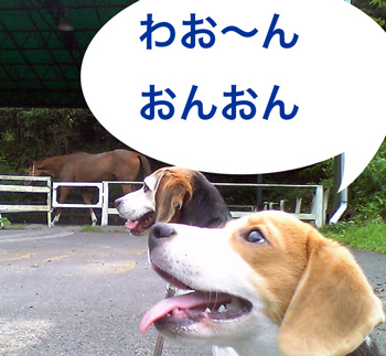 Vivo馬を見る_b0005652_95207.jpg