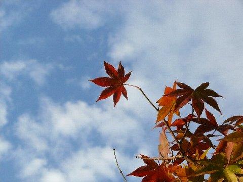 あっ、秋だ・・・_f0147895_18442595.jpg