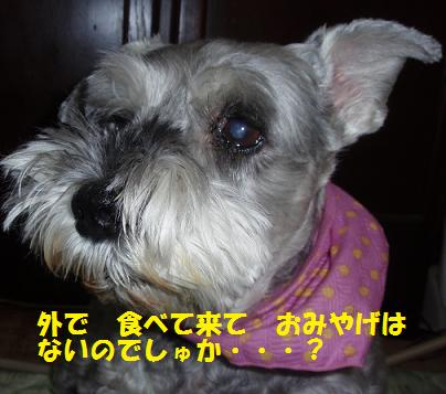 c0098501_180196.jpg