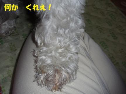 c0098501_1824647.jpg
